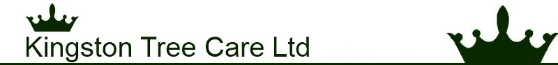 Kingston Tree Care Ltd Footer