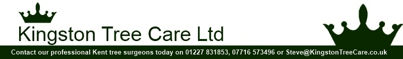Kingston Tree Care Ltd Logo